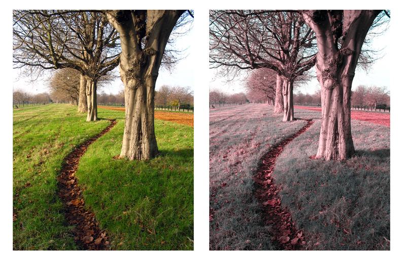 Photoshop Tritanopia Simulation Plugin Preset Tutorial